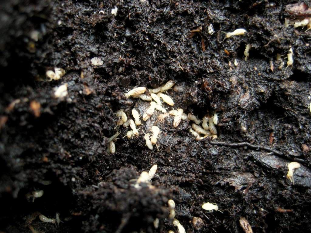It S Not Work It S Gardening Termites Don T Panic