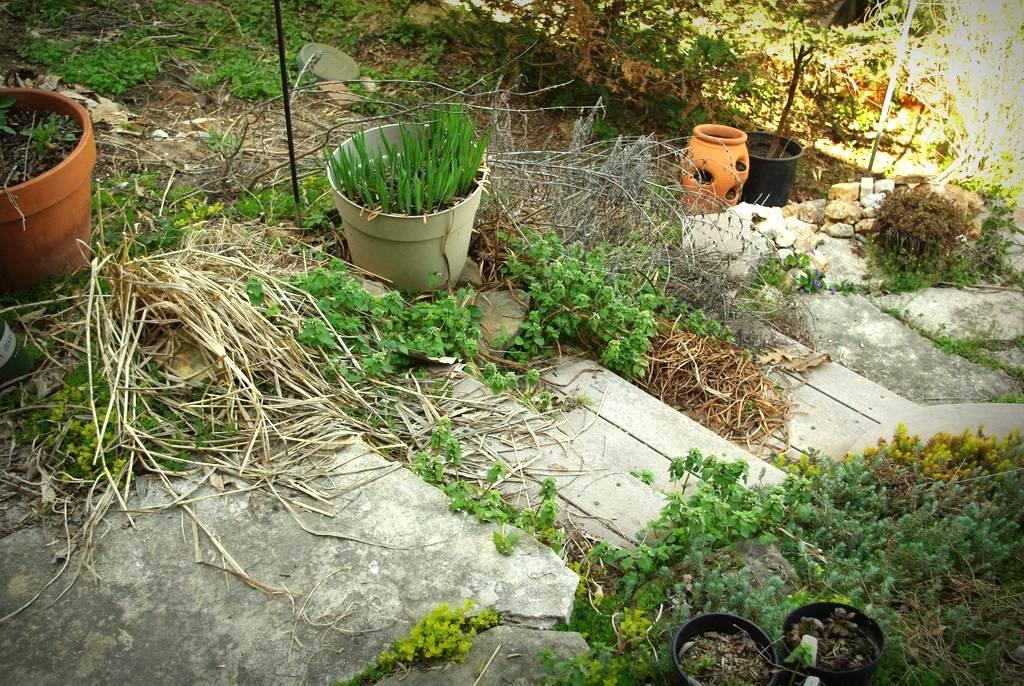 Various - I'll Weeds Grow Apace