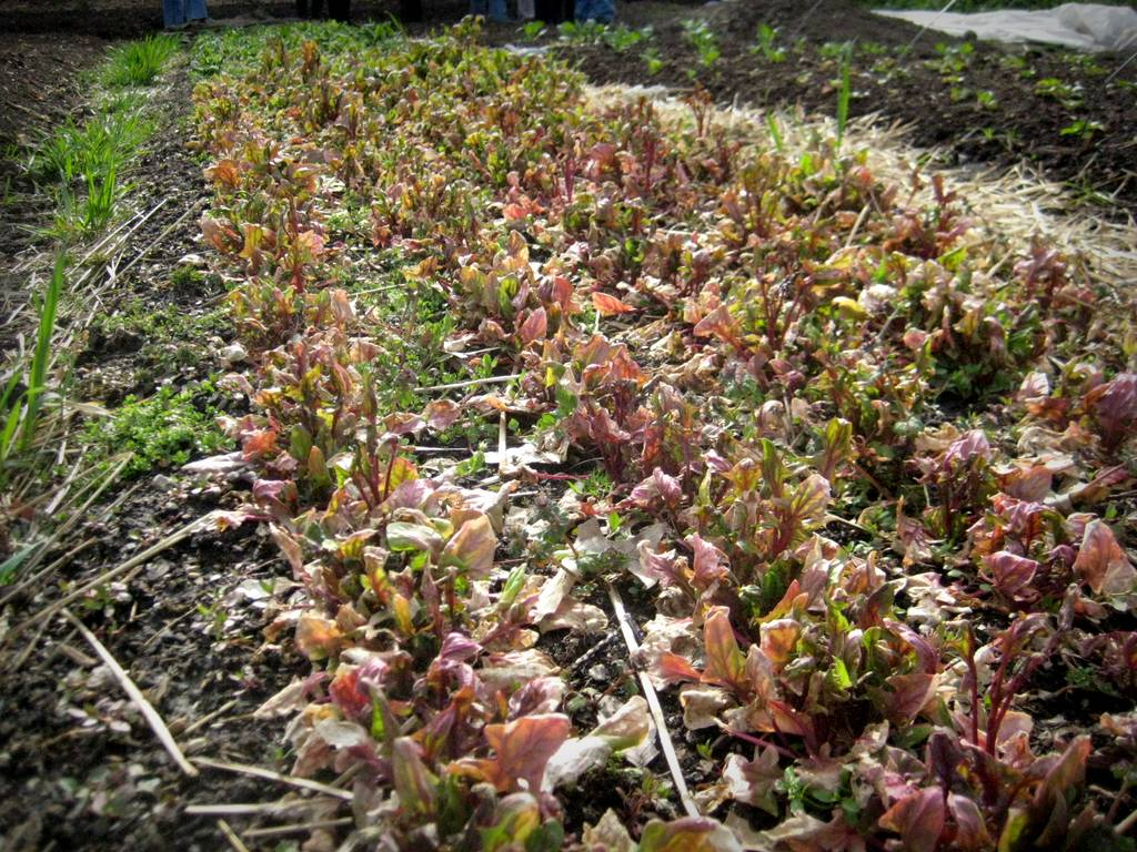 It\'s Not Work, It\'s Gardening!: Schlafly Gardenworks in April