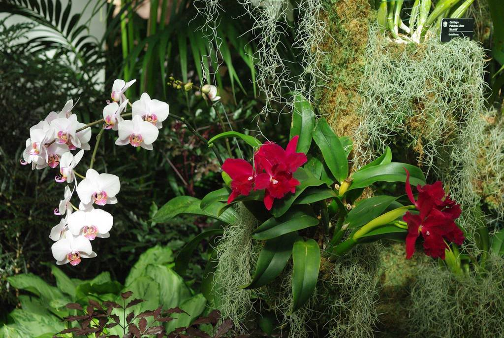 It 39 S Not Work It 39 S Gardening St Louis 2012 Orchid Show Part 2