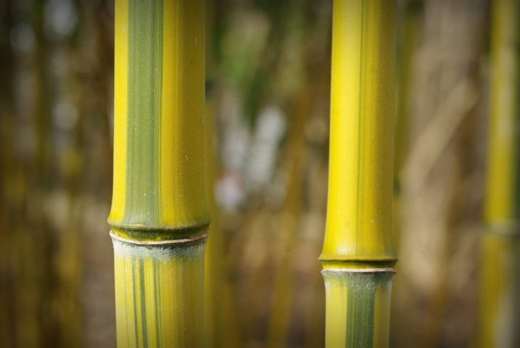 08d9dd39f236 beautiful bamboo