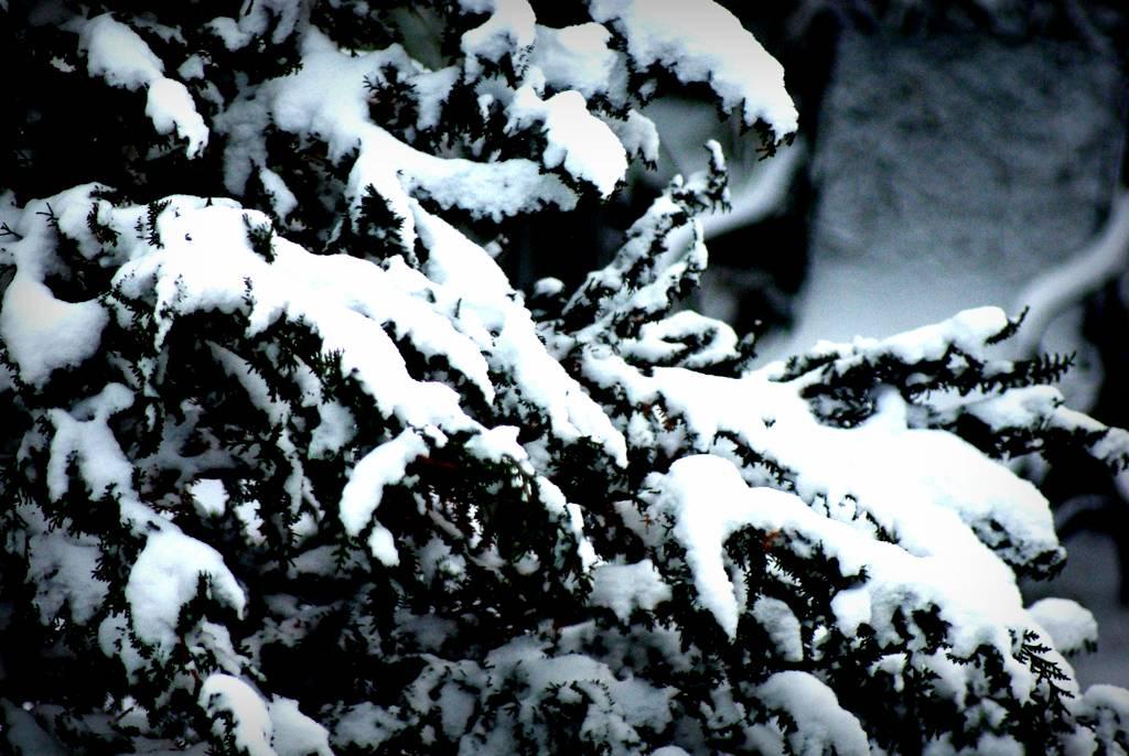 georgias mild winter means - 1024×686
