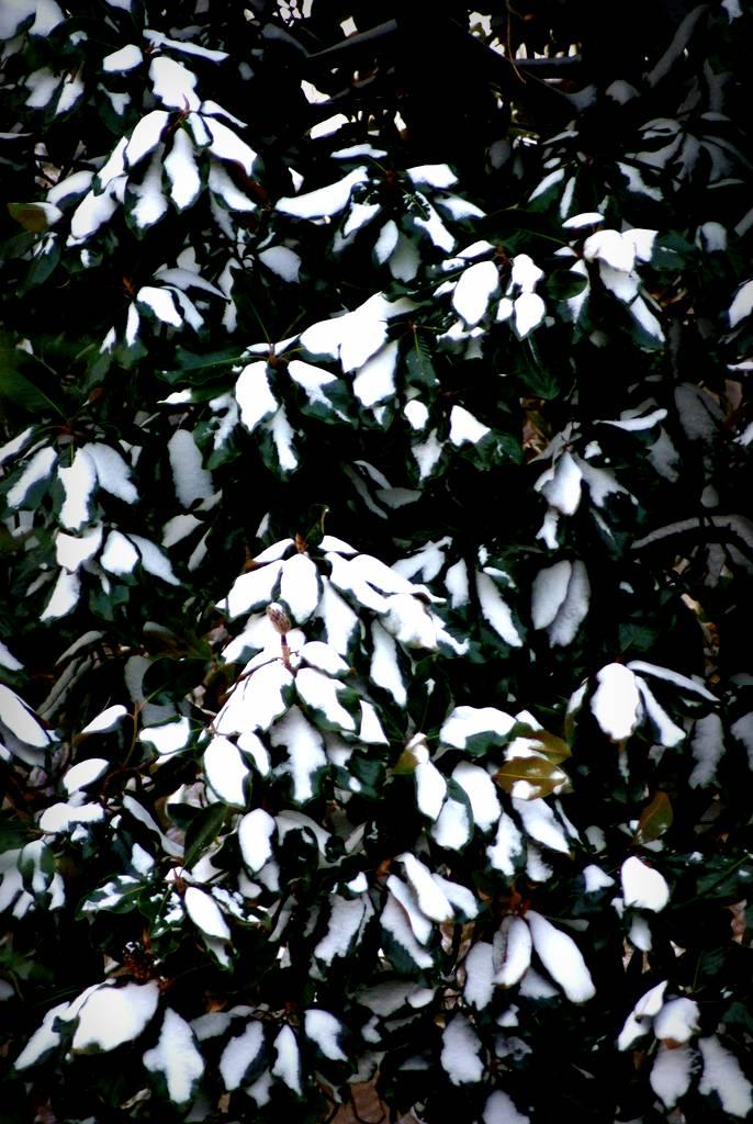 georgias mild winter means - 686×1024