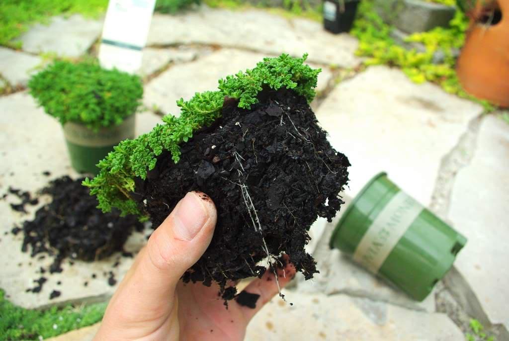 Filling Flagstone Patio Cracks