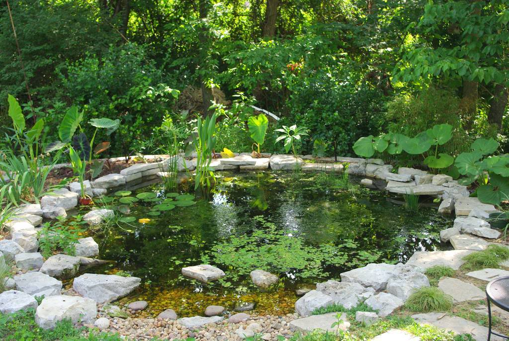 It 39 s not work it 39 s gardening pond update early june for Landscaping around a small pond