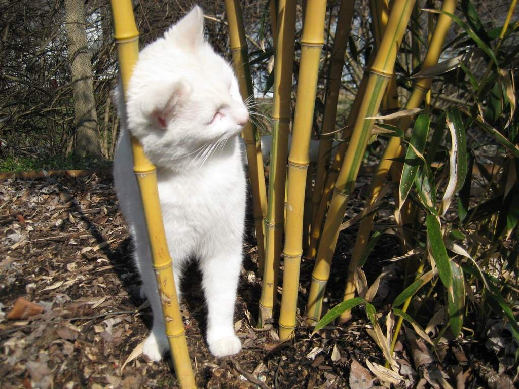 Its not work its gardening cats love agave that cats really love bamboo not just rubbing against it but eating it too i love how cut bamboo looks in vases indoors but that look doesnt last reviewsmspy