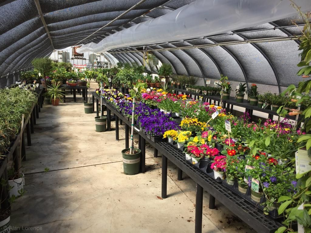 It S Not Work Gardening Early Spring Nursery Visit