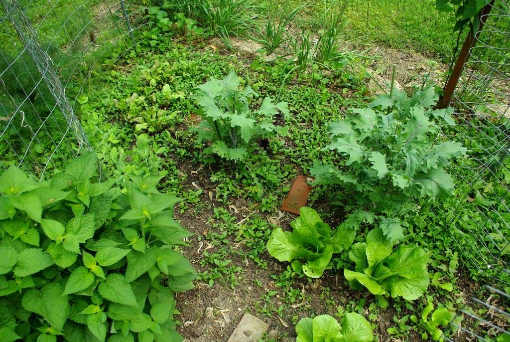 It 39 s not work it 39 s gardening veggie garden gets some love - Weeding garden make work easier ...