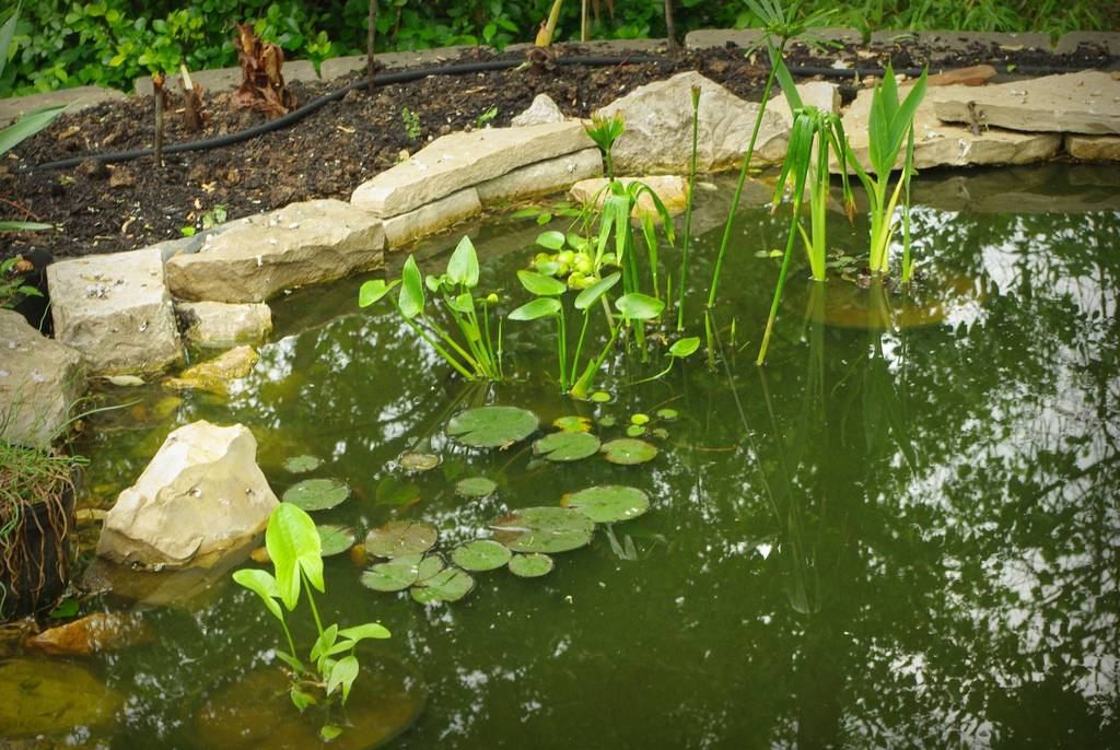 It 39 s not work it 39 s gardening a closer look at the pond for Pond oxygenator